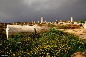 A large flower field with lots of daisies amongst ancient ruins, somewhere on Delos island.