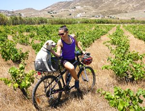 Explore the island of Mykonos by cycling (biking). Girl and dog on bicycle in grape field.